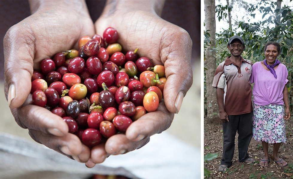Charles and Stella grow coffee on their land in Papua New Guinea.