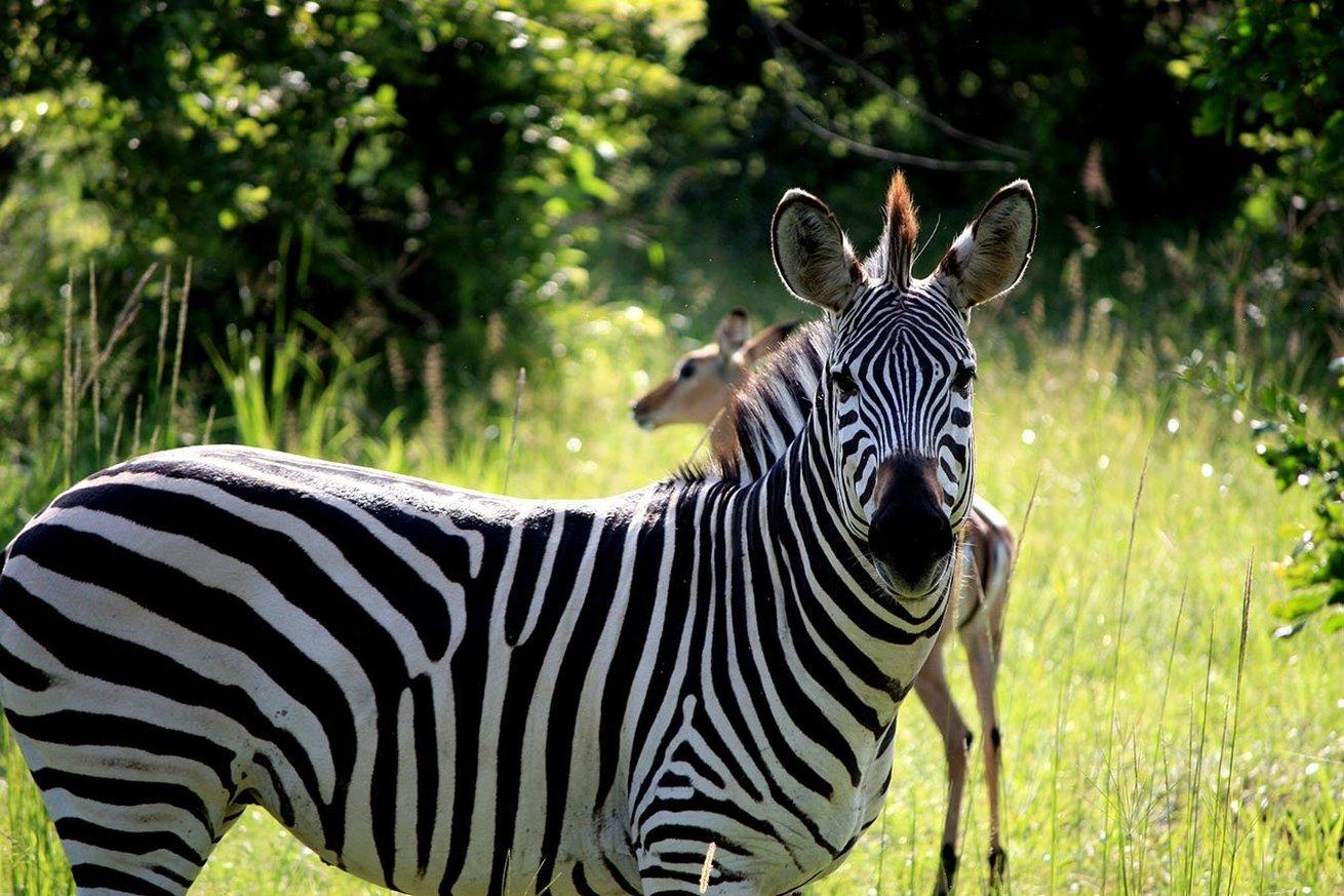 South Luangwa National Park, Zambia. Photo: Henning Borgersen