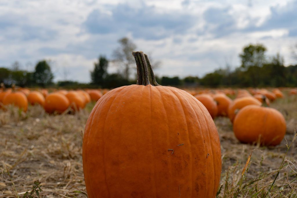 Fun facts you didn't know about pumpkins