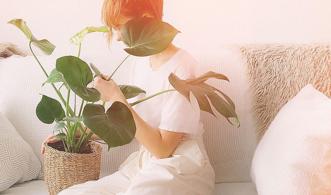 gift plant resize